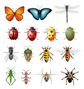 insects-bugs-vector-556031